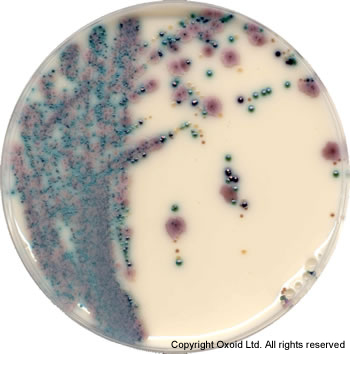 CM1002 BRILLIANCE CANDIDA AGAR